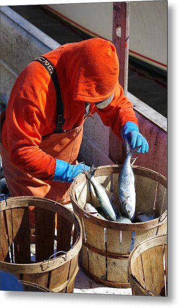 Fisherman Sorting His Catch Metal Print