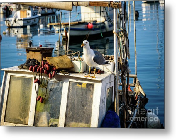 Fishing Boat Captain Seagull - Rovinj, Croatia Metal Print