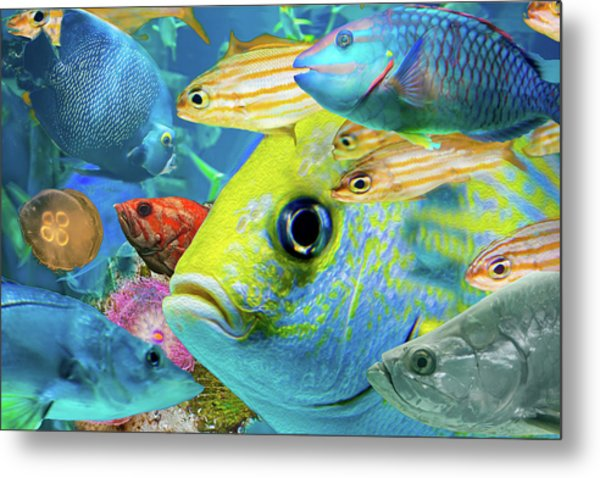 Fishy Collage 02 Metal Print