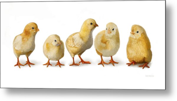 Five Chicks In A Row Metal Print