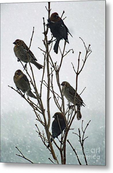 Five Cowbirds Sitting In A Tree Metal Print