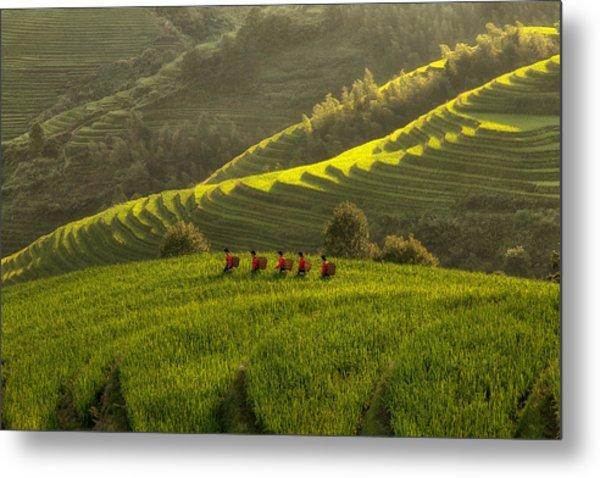 Five Ladies In Rice Fields Metal Print