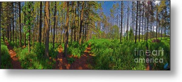 Paths, Pines 360 Metal Print