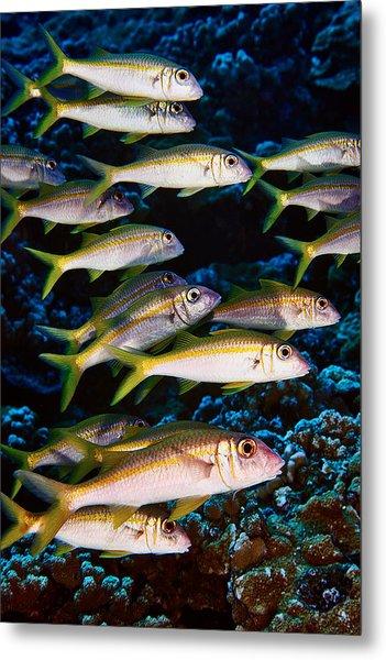 Fla-150811-nd800e-26035-color Metal Print