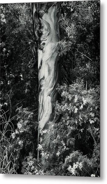 Fla-150523-nd800e-24853-bw-green Metal Print