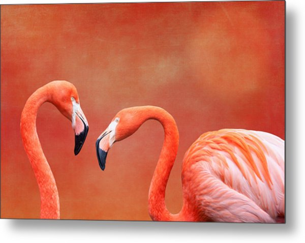 Flamboyant Flamingos Metal Print