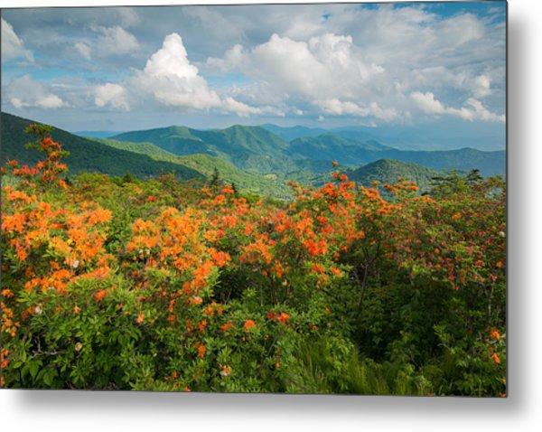 Flame Azaleas Roan Highlands Appalachian Trail Metal Print