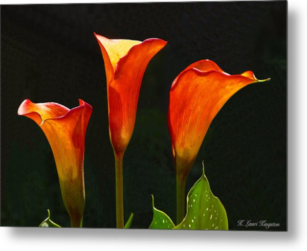 Flame Calla Lily Flower Metal Print