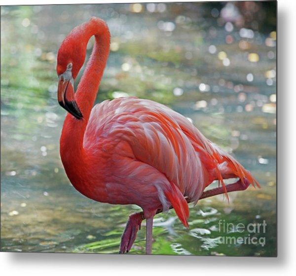 Flamingo 2  Metal Print