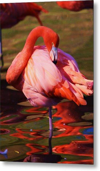 Flamingo 2 Metal Print by Russell  Barton