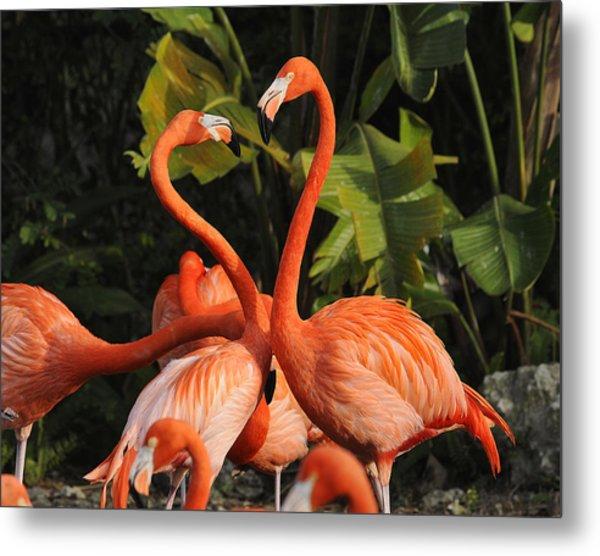 Flamingo Heart Metal Print by Keith Lovejoy
