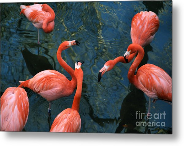 Flamingo Party 1 Metal Print