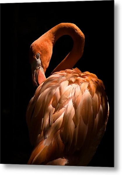Flamingo Metal Print by Patrick  Flynn