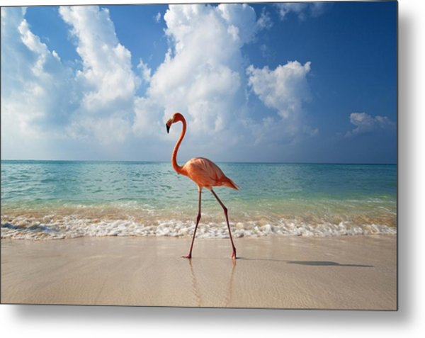 Flamingo Walking Along Beach Metal Print