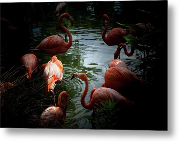 Metal Print featuring the photograph Flamingos by Eric Christopher Jackson