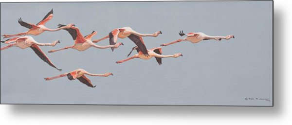 Flamingos In Flight Metal Print