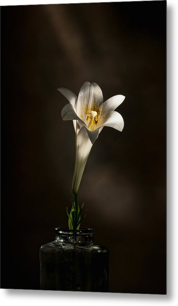 Flashlight Series Easter Lily 1 Metal Print