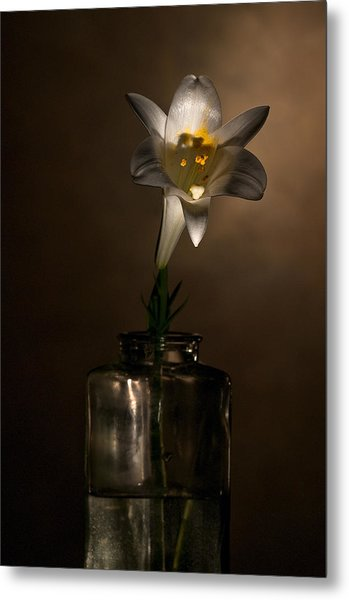 Flashlight Series Easter Lily 2 Metal Print