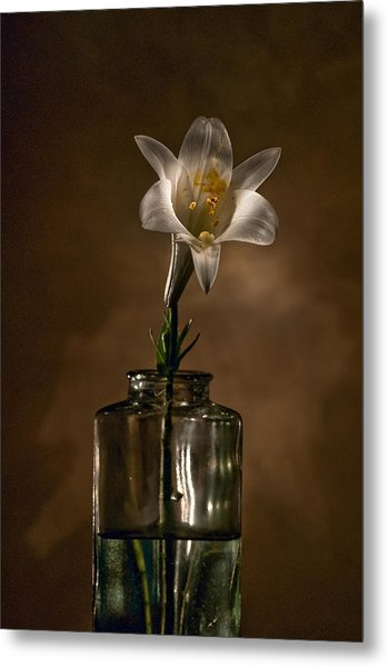 Flashlight Series Easter Lily 3 Metal Print