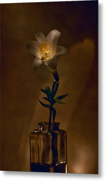 Flashlight Series Easter Lily 4 Metal Print