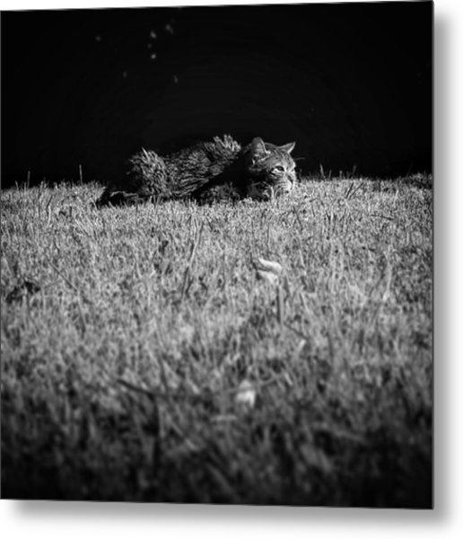 Flat Cat Metal Print