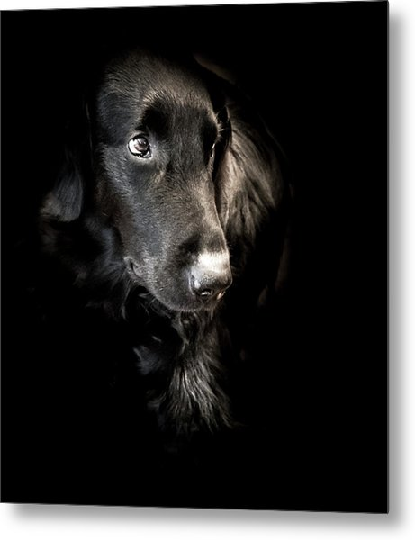 Flat Coated Retriever Metal Print