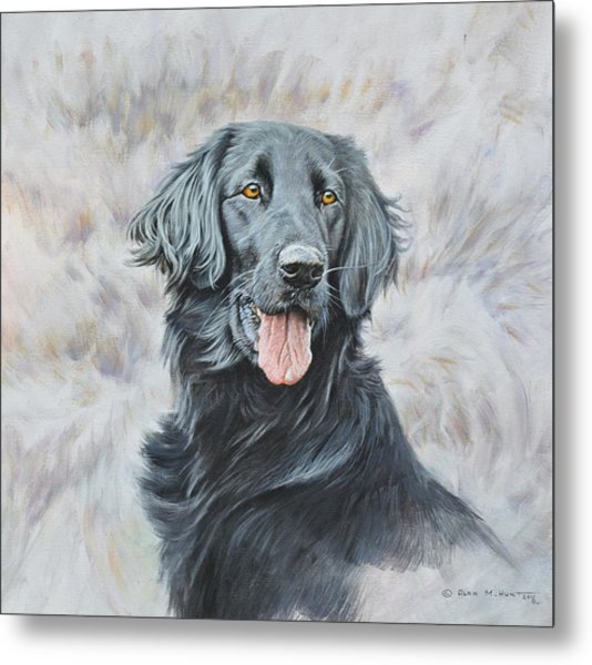 Flat Coated Retriever Portrait Metal Print