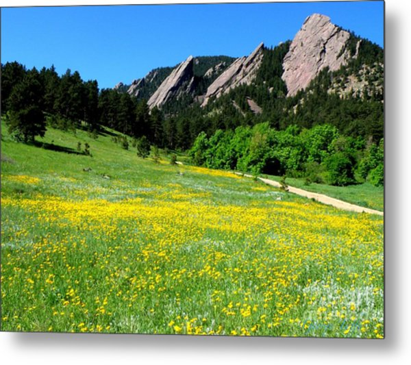 Flatirons And Yellow Meadow Metal Print