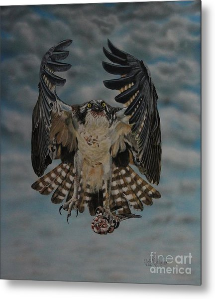 Fleck The Osprey  Metal Print