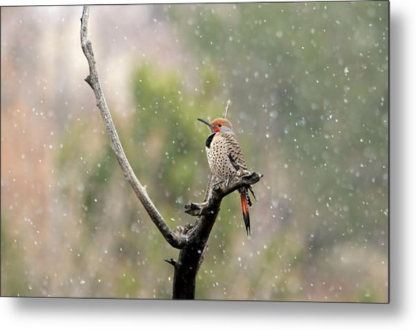 Flicker In The Rain Metal Print