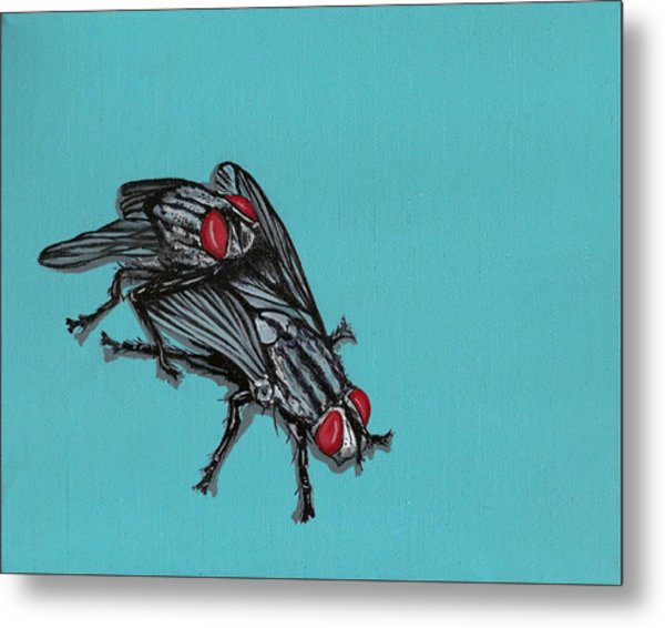 Flies Metal Print