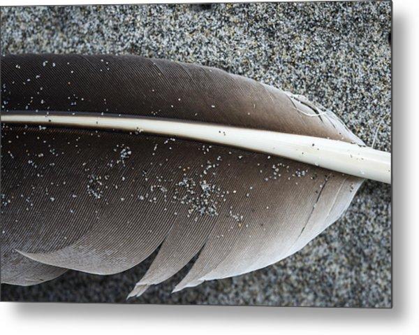 Flight Feather Metal Print