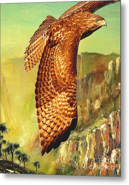 Flight Of The Red Tailed Hawk Metal Print by Wingsdomain Art and Photography