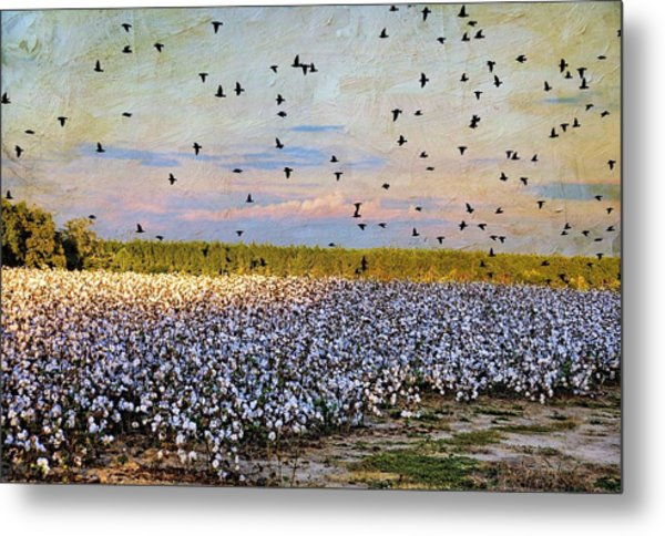 Flight Over The Cotton Metal Print