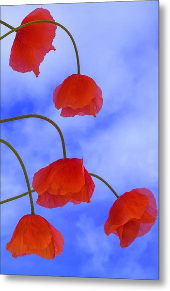 Flight Red Metal Print
