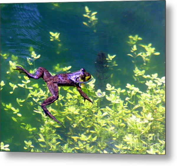 Floating Frog Metal Print