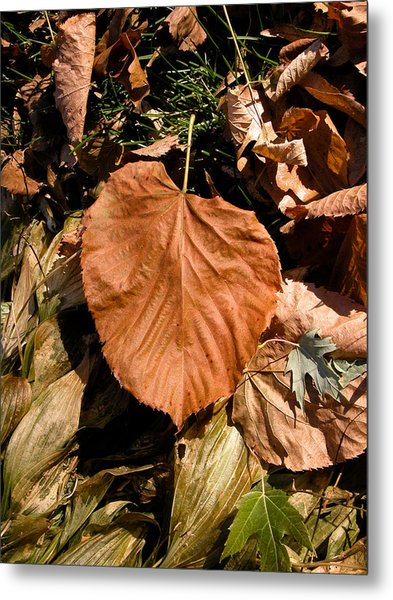 Floating Leaf Metal Print