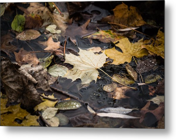 Floating Leaves Metal Print