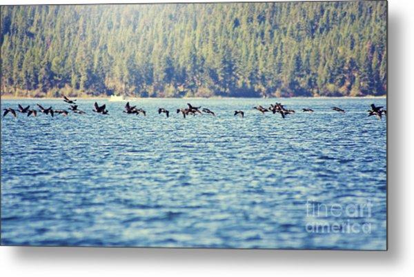 Flock Of Geese Metal Print