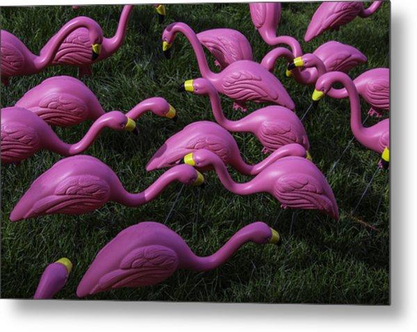 Flock Of  Plastic Flamingos Metal Print
