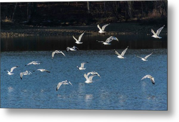 Flock Of Them Metal Print