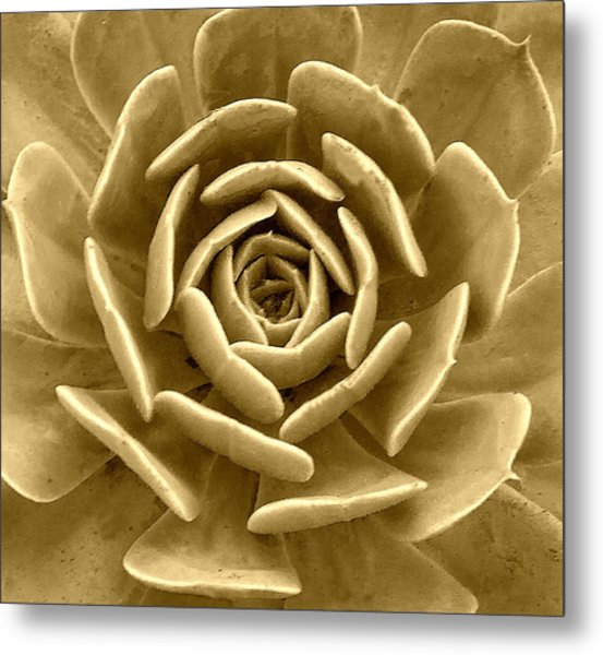 Floral Abstract Metal Print