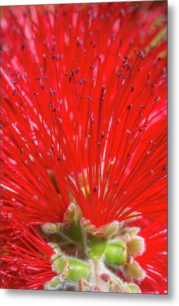 Floral Red Metal Print