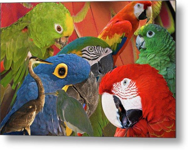 Florida Birds Metal Print