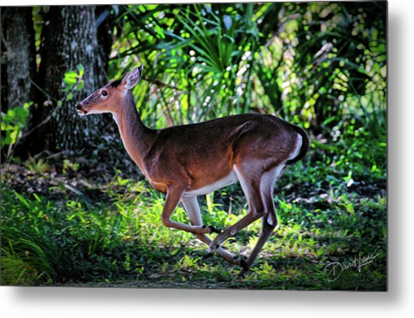 Florida Deer Metal Print