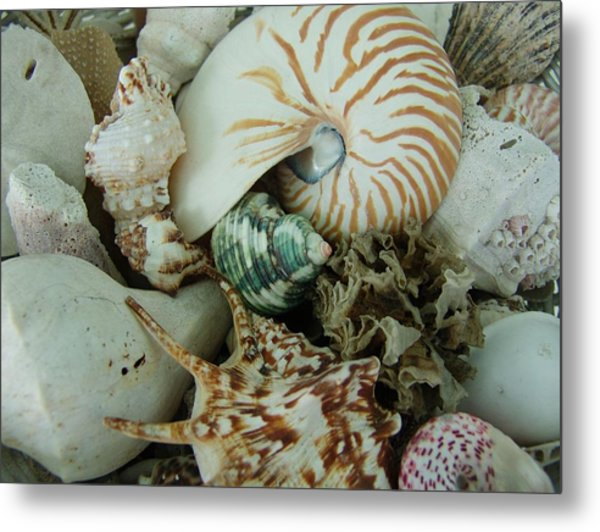 Florida Sea Shells Metal Print