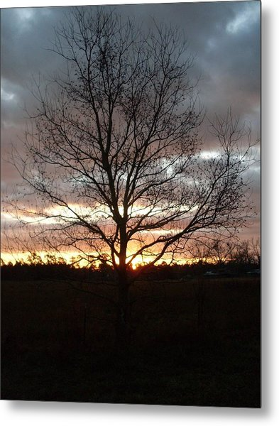 Florida Sunrise And Tree Metal Print by Warren Thompson