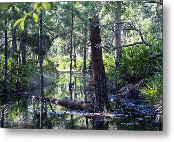 Florida Swamp Metal Print