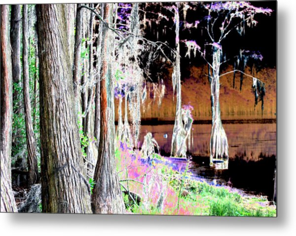 Florida Swamp Metal Print by Peter  McIntosh