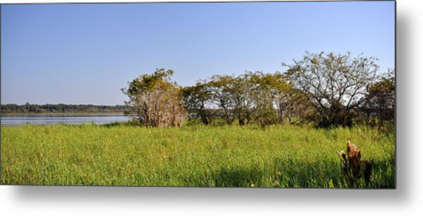 Florida Wetlands Panoramic Metal Print